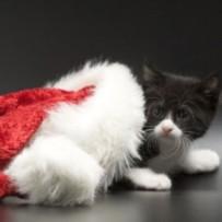 AEVA os desea Felices Fiestas