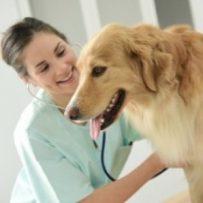 El Congreso de los Diputados ha rechazado la petición de los empresarios para reducir el IVA de los servicios veterinarios al 10%