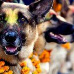 AEVA celebra el Día Mundial del Perro